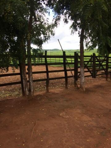 Fazenda-Granja-Sítio com 21 Hectares em Aliança - Foto 4