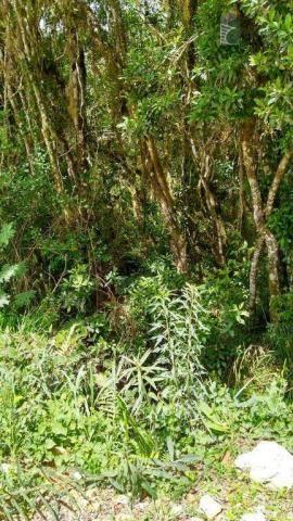 Chácara no campo largo da roseira, são josé dos pinhais. - Foto 12