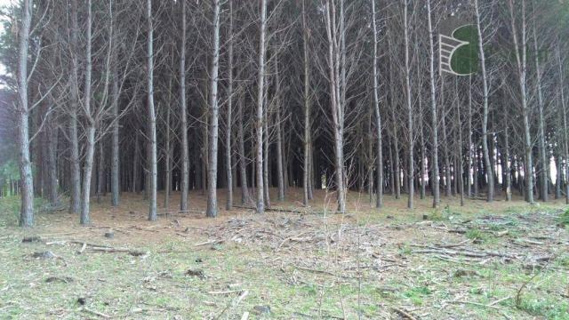 Chácara no campo largo da roseira, são josé dos pinhais - ar0019. - Foto 4
