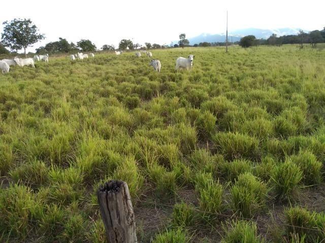 Excelente Fazenda de 1.955,79 Hectares em Formosa-GO - Foto 3