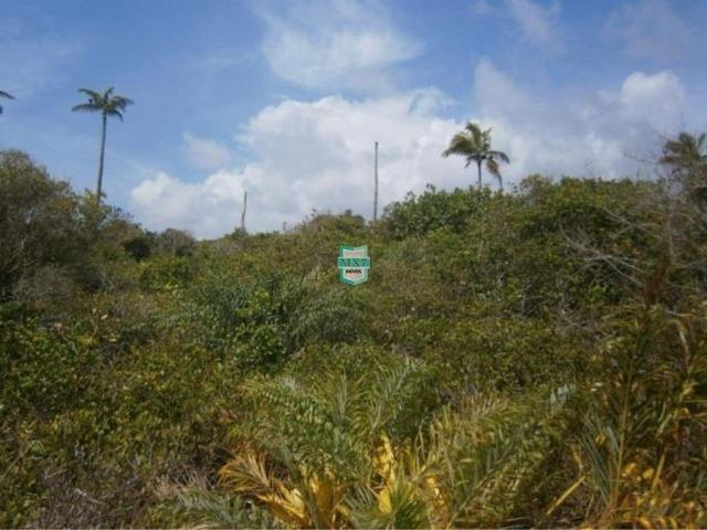 Itacaré. Fazenda de frente para o mar com 100 Hectares - Foto 9
