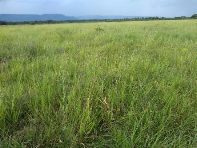Excelente Fazenda de 1.955,79 Hectares em Formosa-GO - Foto 5