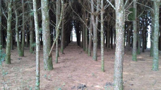 Chácara no campo largo da roseira, são josé dos pinhais - ar0019. - Foto 2