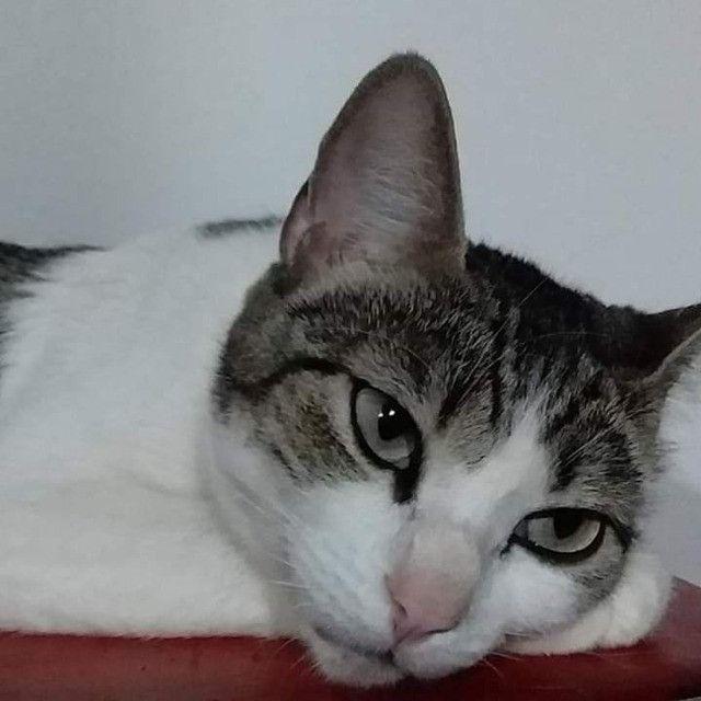 Gatinha castrada para adoção - Foto 4