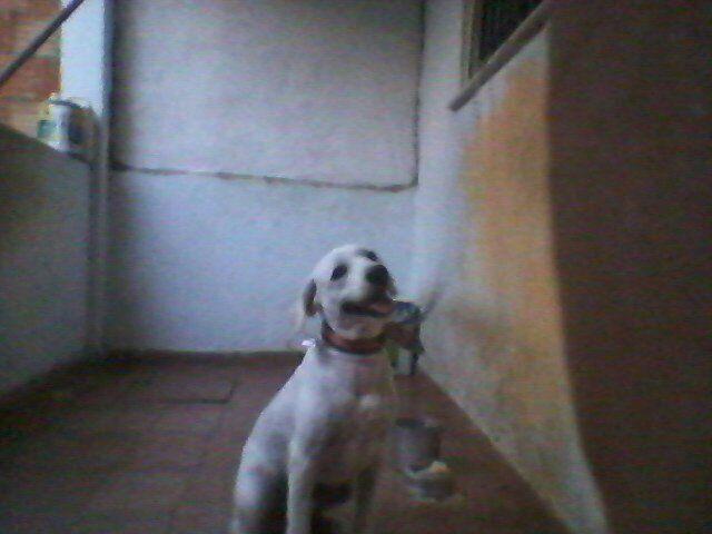 Estou doando meu cachorro Duque