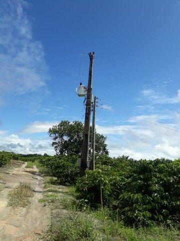 Vendo terreno produtivo - Foto 7
