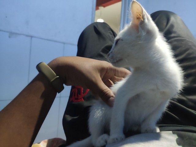 Estou doando essa gatinha