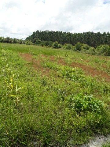 Vendo terreno produtivo - Foto 14