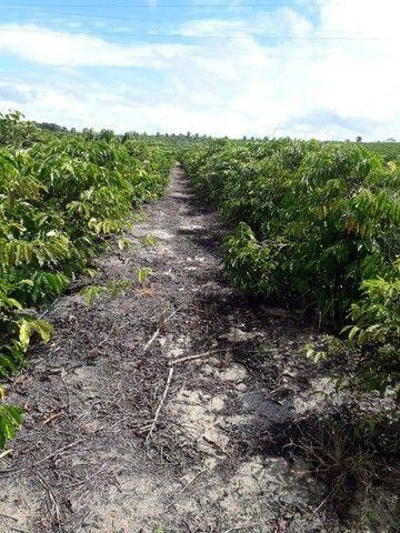 Vendo terreno produtivo - Foto 8