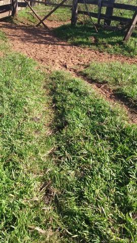 Fazenda de 114 alqueires - Aparecida do Taboado-MS-F090219 - Foto 3