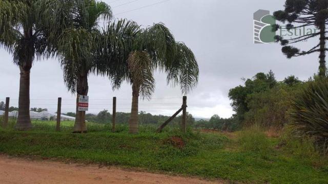 Terreno na colônia murici em são josé dos pinhais. - Foto 11