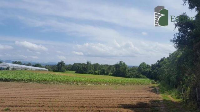 Terreno na colônia murici em são josé dos pinhais. - Foto 2