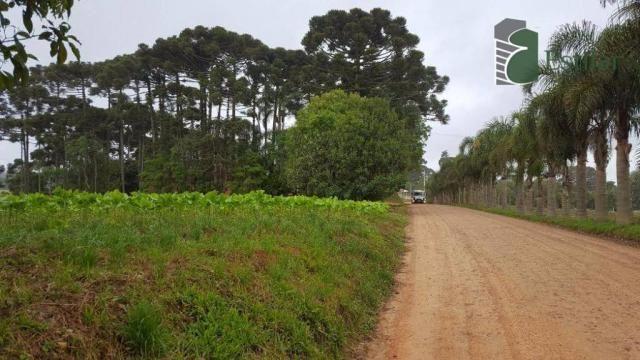 Terreno na colônia murici em são josé dos pinhais. - Foto 5