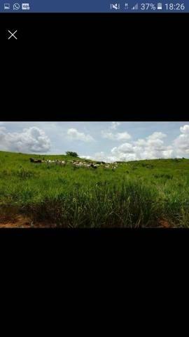 Arrendo Fazenda ou Pasto para 3 mil cabeças de Boi