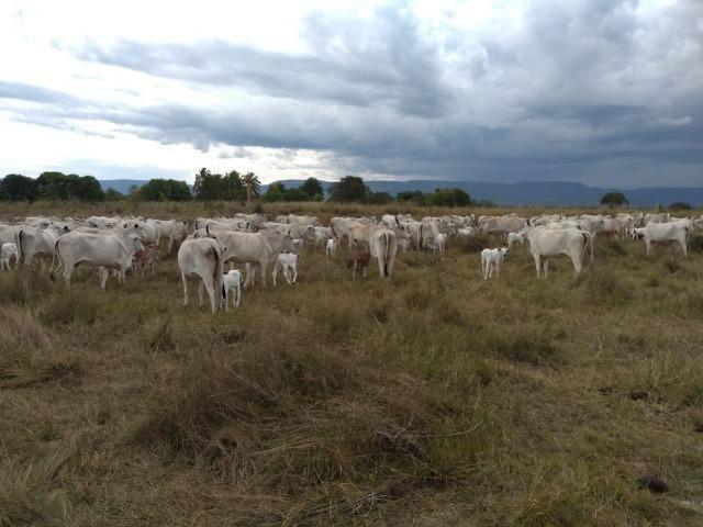 Excelente Fazenda de 1.955,79 Hectares em Formosa-GO - Foto 13