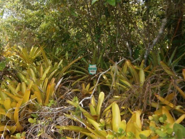 Itacaré. Fazenda de frente para o mar com 100 Hectares - Foto 14