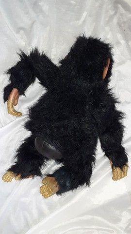 Macaco antigo senario  - Foto 3