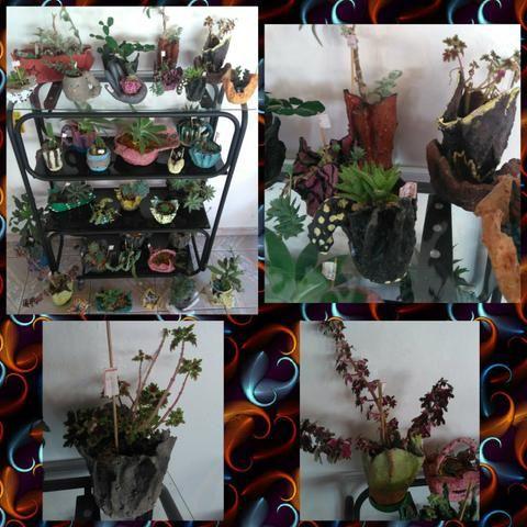 Plantas suculentas a partir de R$ 10.00