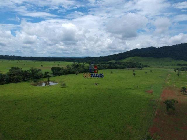 Fazenda à venda, por R$ 11.594.000 - Alta Floresta D'Oeste/RO - Foto 14