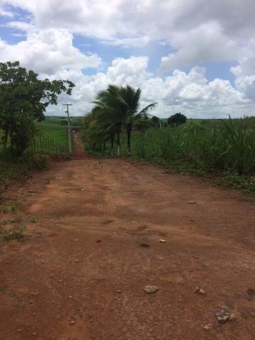 Fazenda-Granja-Sítio com 21 Hectares em Aliança - Foto 13
