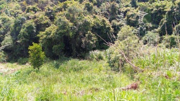 Chácara no campo largo da roseira, são josé dos pinhais. - Foto 13