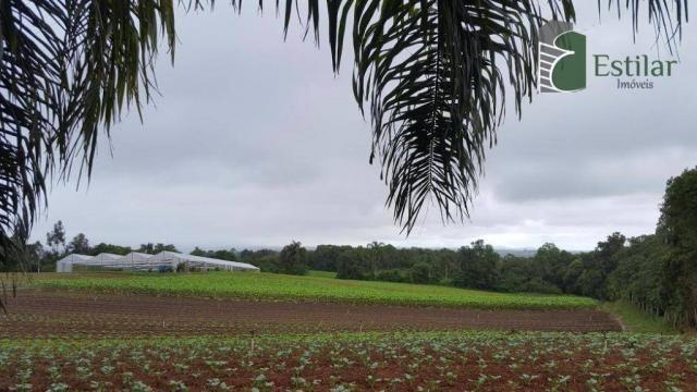 Terreno na colônia murici em são josé dos pinhais. - Foto 4