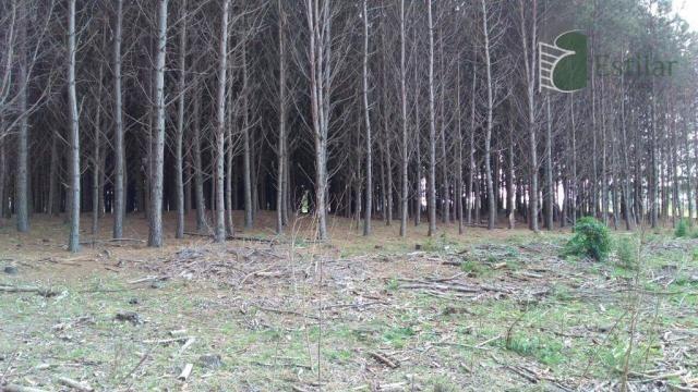 Chácara no campo largo da roseira, são josé dos pinhais - ar0019. - Foto 11