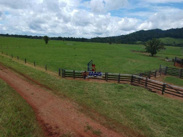 Fazenda à venda, por R$ 11.594.000 - Alta Floresta D'Oeste/RO - Foto 7