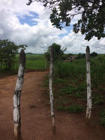 Fazenda-Granja-Sítio com 21 Hectares em Aliança - Foto 18
