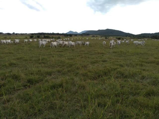 Excelente Fazenda de 1.955,79 Hectares em Formosa-GO - Foto 7