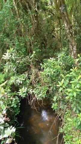 Chácara no campo largo da roseira, são josé dos pinhais. - Foto 9