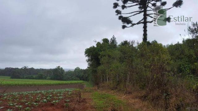 Terreno na colônia murici em são josé dos pinhais. - Foto 14