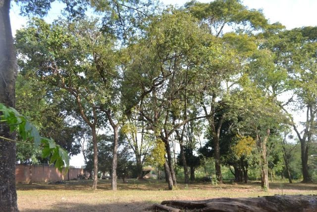 Chácara á venda (4 lotes): 9.729,72 m². Cidade Vera Cruz, Aparecida de Goiânia-GO - Foto 16