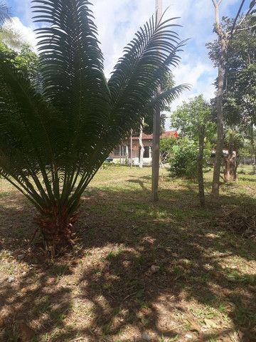 Vende se chácara no Maranhão  - Foto 2