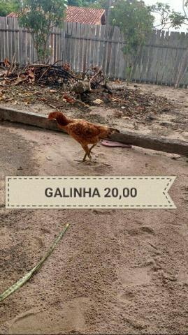 Vendo galinhas e galos de 10,00 á 25,00