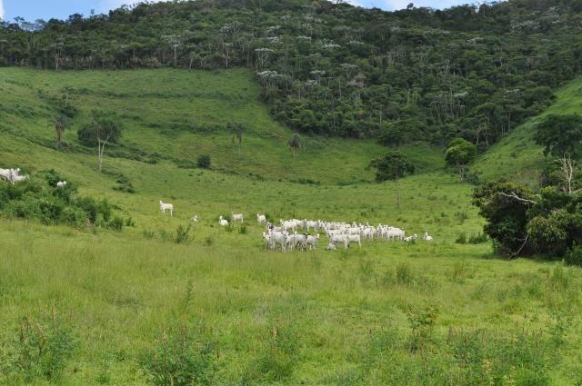 Vendo Fazenda com 1.110 alqueires Localizada em Teófilo Otoni-Mg - Foto 10