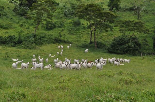 Vendo Fazenda com 1.110 alqueires Localizada em Teófilo Otoni-Mg