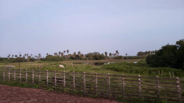 Belíssima fazenda com 295 há em ceara mirim, curral, casas, rio perene,poço - Foto 7
