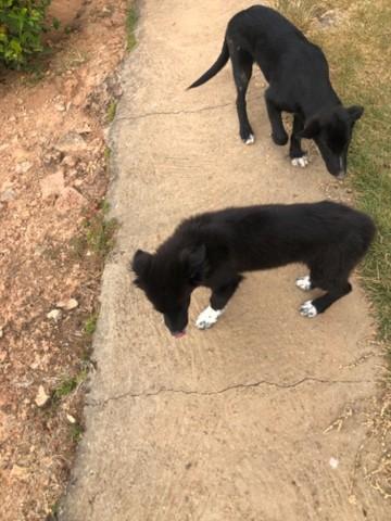 Filhote de cachorro - Foto 2