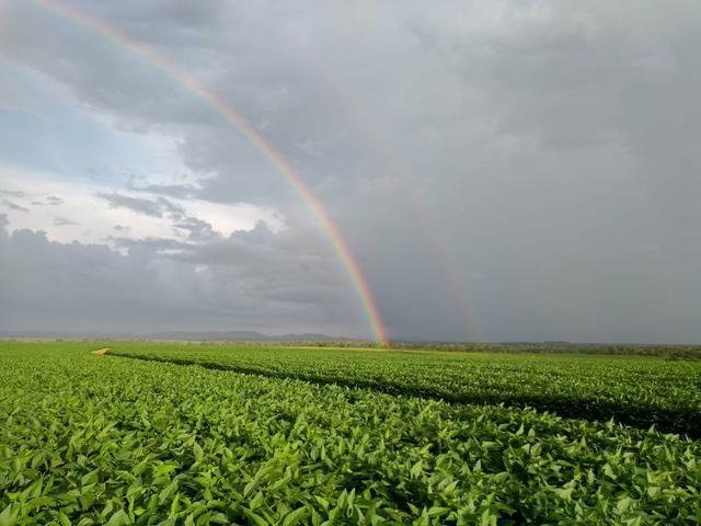 Fazenda em Santa Maria das barreiras-Pa - Foto 3