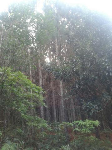Área própria para chácara à 15 km de Gramado-RS - Foto 8