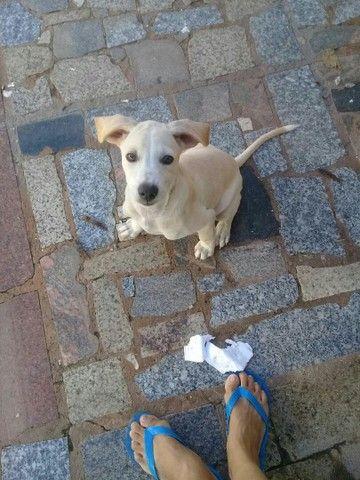 Cachorrinha Srd adoção
