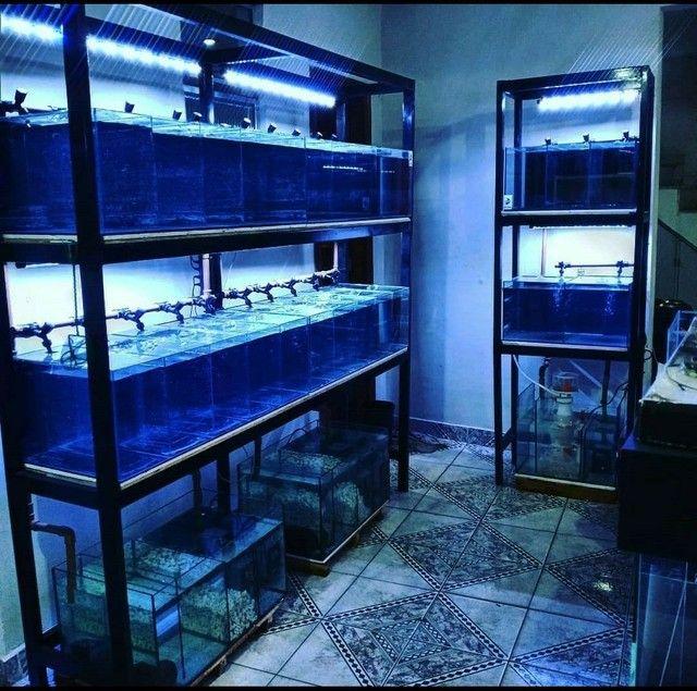 Bateria de aquários  - Foto 2