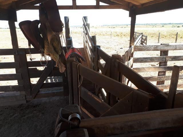 Fazenda de 220 alqueire em Novo Mundo -MT - Foto 5