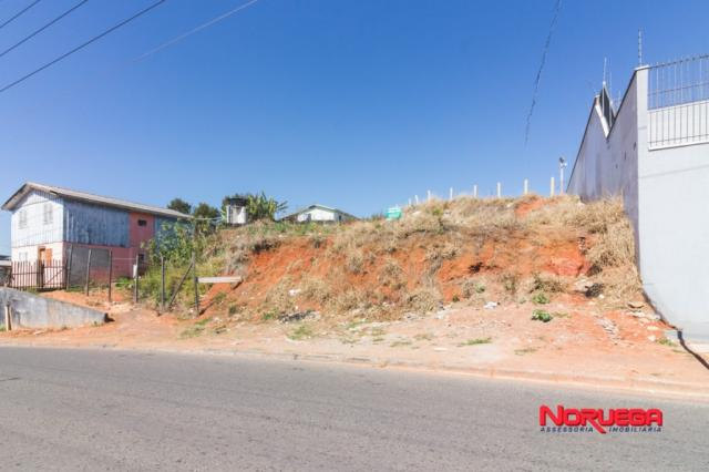 Terreno para alugar em Alto maracanã, Colombo cod:36400.001 - Foto 3