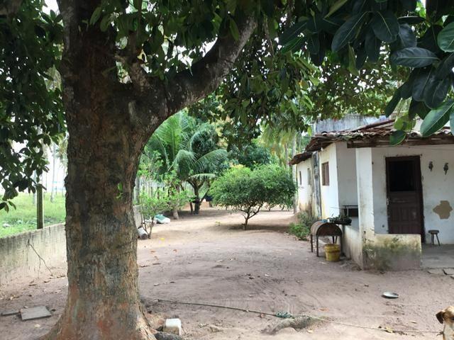 Sol 22 - Excelente Granja sendo 6385m² no Centro - São José de Mipibu - RN - Foto 3