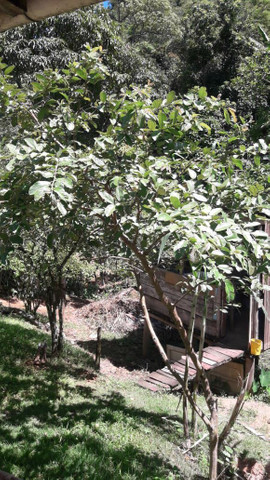 Vendo terreno  com casas - Foto 10