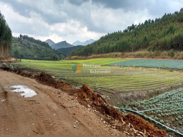 Fazenda produtiva, 116 ha, vale alpino, teresópolis, rj