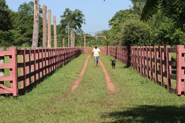 Chácara na região de Santo Antônio de Cuiabá com 32 HA Uma propriedade dos sonhos a 25 - Foto 18