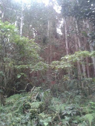 Área própria para chácara à 15 km de Gramado-RS - Foto 6